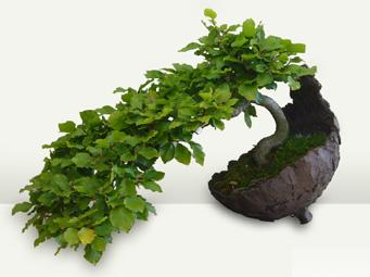 bonsai b ume schalen zubeh r erde werkzeug und viles mehr. Black Bedroom Furniture Sets. Home Design Ideas